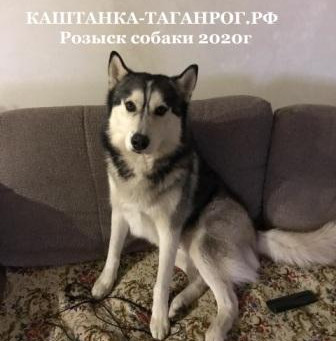 ТАГАНРОГ Розыск собаки 2020г