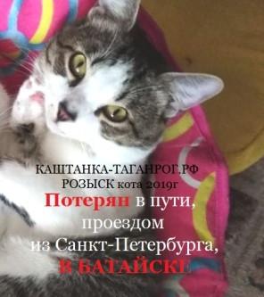 Потерян в пути (из Санкт-Петербурга) В БАТАЙСКЕ Розыск кота 2019г