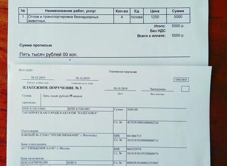 Отчет №51 Стерилизация собаки №19-68 Молли(стая ул.Портовая,1)