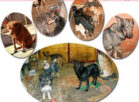 """не хватает 4300 руб.Сбор №21 КОРМ (на ноябрь-декабрь 2020г) собакам частного приюта """"Бедная МАМА"""""""