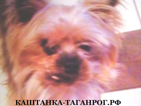 ТАГАНРОГ Розыск собаки 2021г