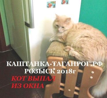 ТАГАНРОГ Розыск кота 2018г