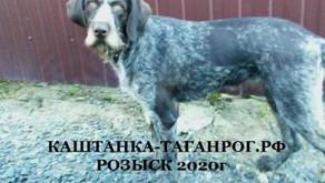ТАГАНРОГ Розыск собаки 2020