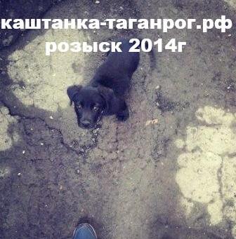 Розыск собаки 2014г Таганрог