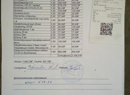 Отчет №49 Стерилизация собаки №19-54 Дина