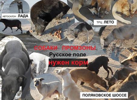 не хватает 4300 руб.Сбор №22 КОРМ(на октябрь 2020г)собакам ПРОМЗОНЫ РУсского поля