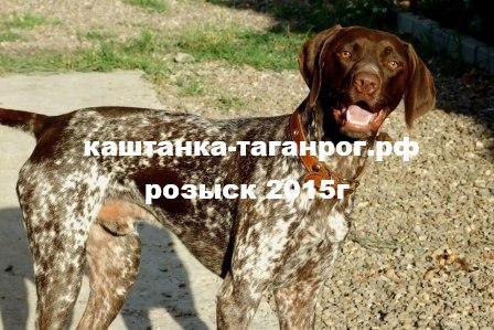 Розыск собаки 2015г Николаевка