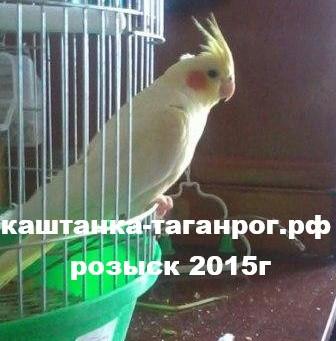 2015г Розыск попугая
