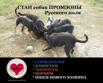 не хватает 6000 руб.Сбор № 19 КОРМ(на ноябрь 2021г)собакам ПРОМЗОНЫ Русского поля