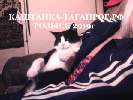 ТАГАНРОГ Розыск кота 2019г