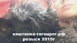 ПОТЕРЯН В ПУТИ на трассе Таганрог-Ростов Розыск собаки 2015г