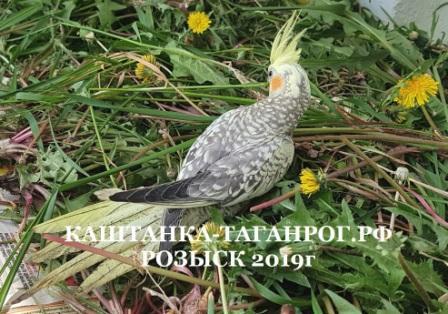 ТАГАНРОГ Розыск попугая 2019г