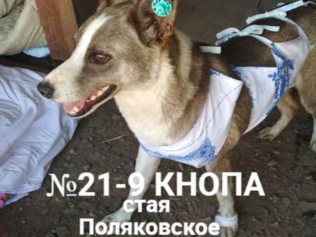 ЗАКРЫТ Сбор №11 Компенсация оплаты стерилизации собаки №21-9 Кнопа