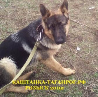 ТАГАНРОГ Розыск собаки 2019г