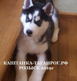ТАГАНРОГ Розыск собаки 2019г.