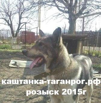 Розыск собаки 2015г Михайловка