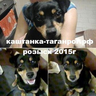 Розыск собаки 2015г Таганрог
