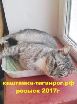 ТАГАНРОГ Розыск кота 2017г