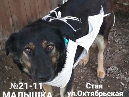 ЗАКРЫТ Сбор №13 Компенсация оплаты стерилизации собаки №21-11 МАЛЫШКА