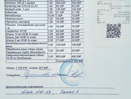 Отчет №15 Стерилизация бездомной собаки №20-29 ЛЮСЯ(стая Дачное - 1)