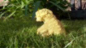 Dog-Pic-02-Restoration-01.jpg