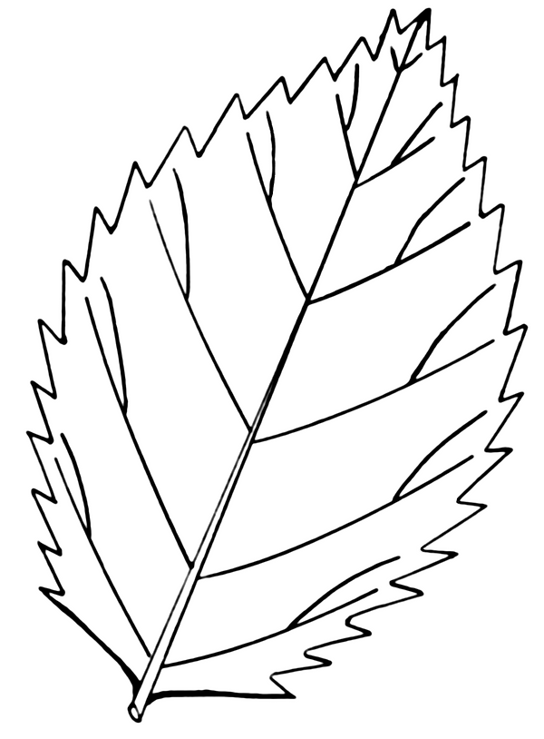 Elm Leaf.png