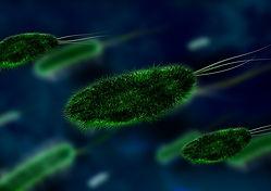 ExOzone ozone sterilization disinfection bacteria microorganism
