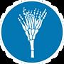 ExOzone ozone sterilization disinfection fungus microorganism
