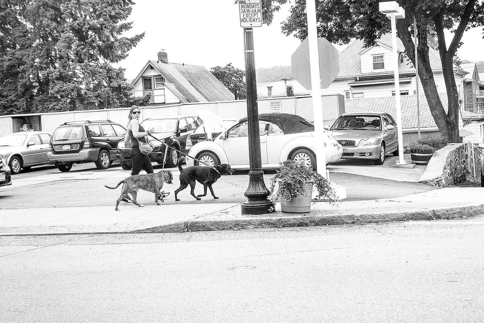 Dog Walking 2