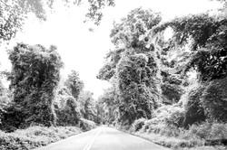 Road Vision I