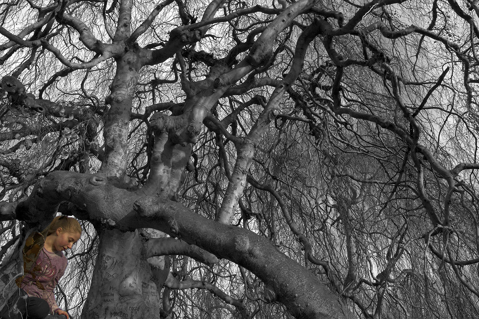 Fiona's Tree