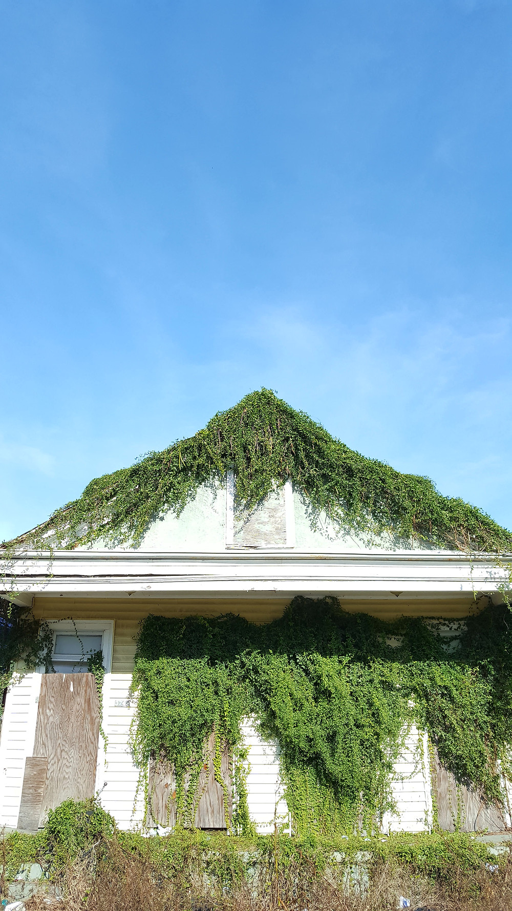 Old New Orleans house with overgrowth