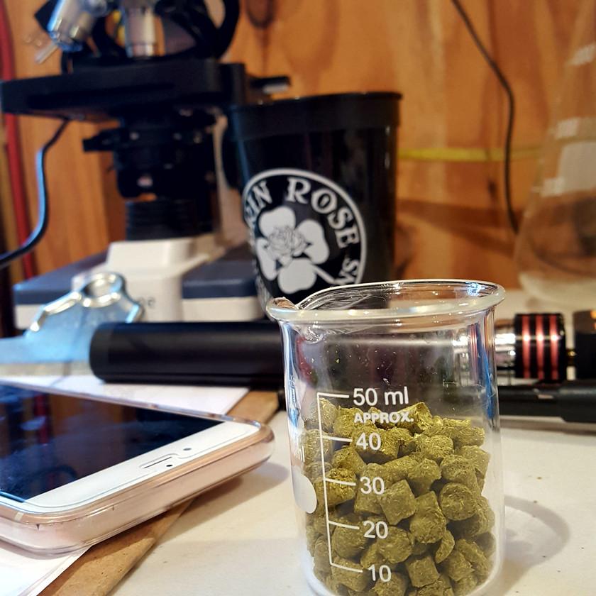 brewing hops