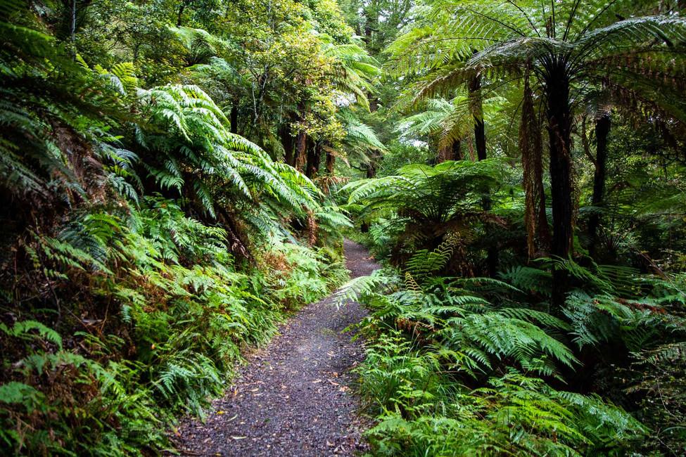 walk in deep forest new zealand.jpg