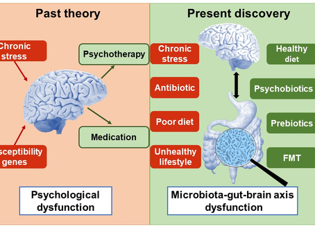 The Gut-Brain Connection: the importance of prebiotics to brain health