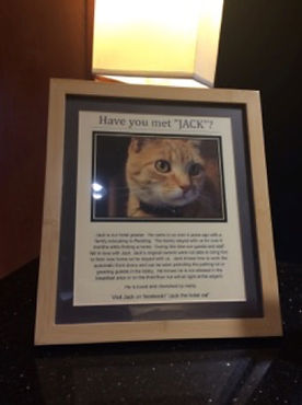 Jack the Cat 2.jpg