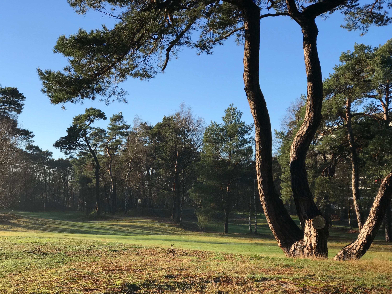 golfbaan2_klein