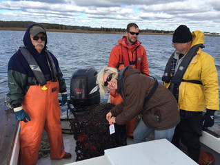Crab Pot Removal on Barnegat Bay