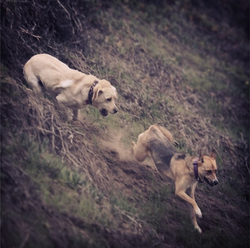 Abby & Leeloo