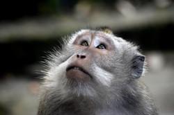Bali Monkey 09