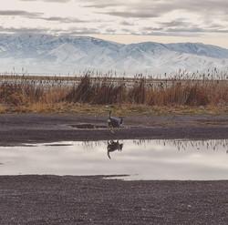 Zuma Salt Lake