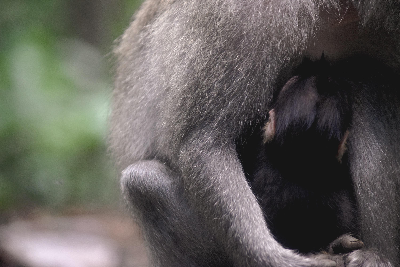 Bali Monkey 04