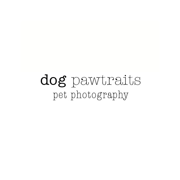 Dog Pawtraits