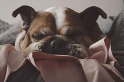 2018_Dogs_00002_edited