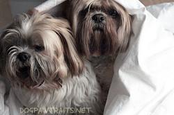 Sammy and Harry