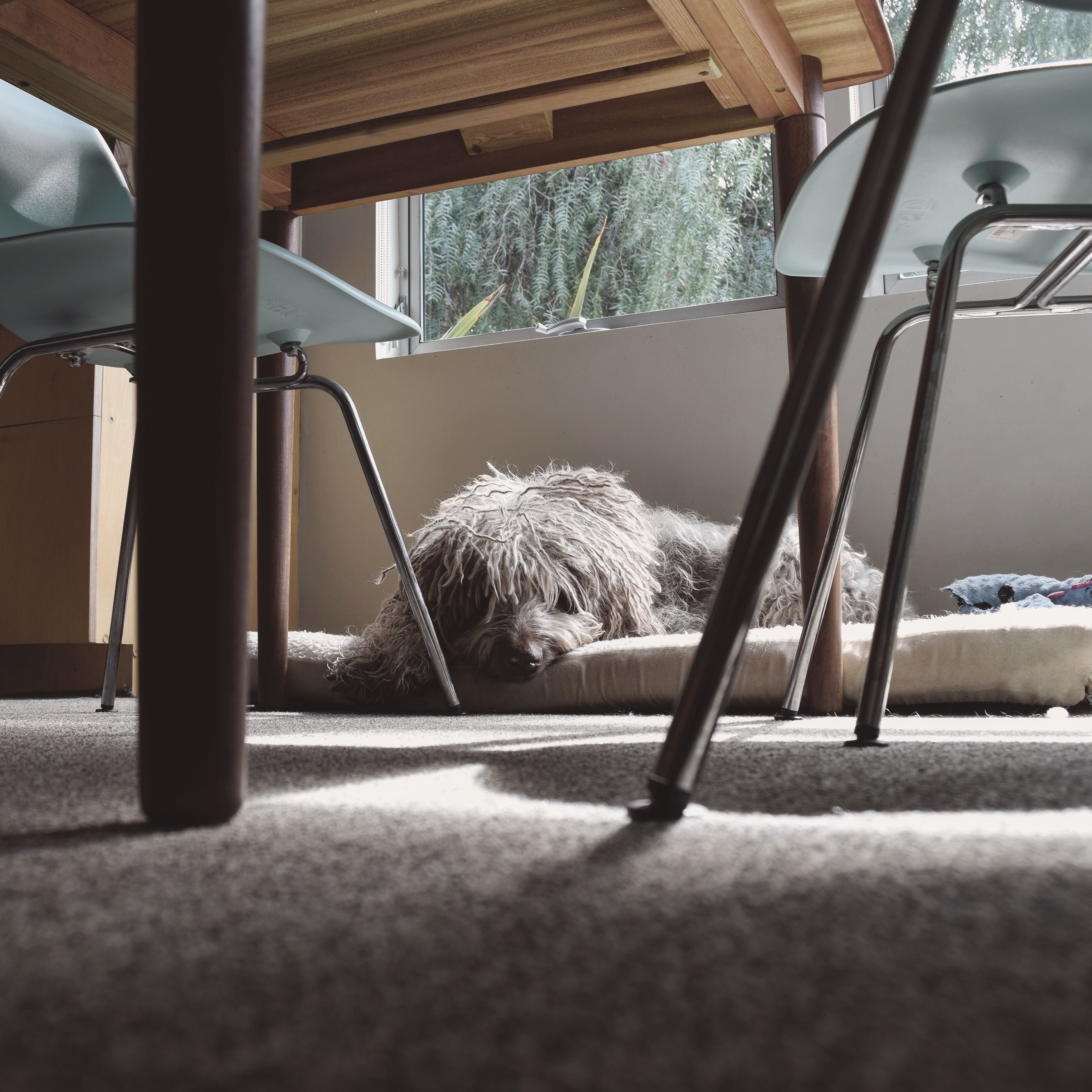 03.2019_Dogs_00021
