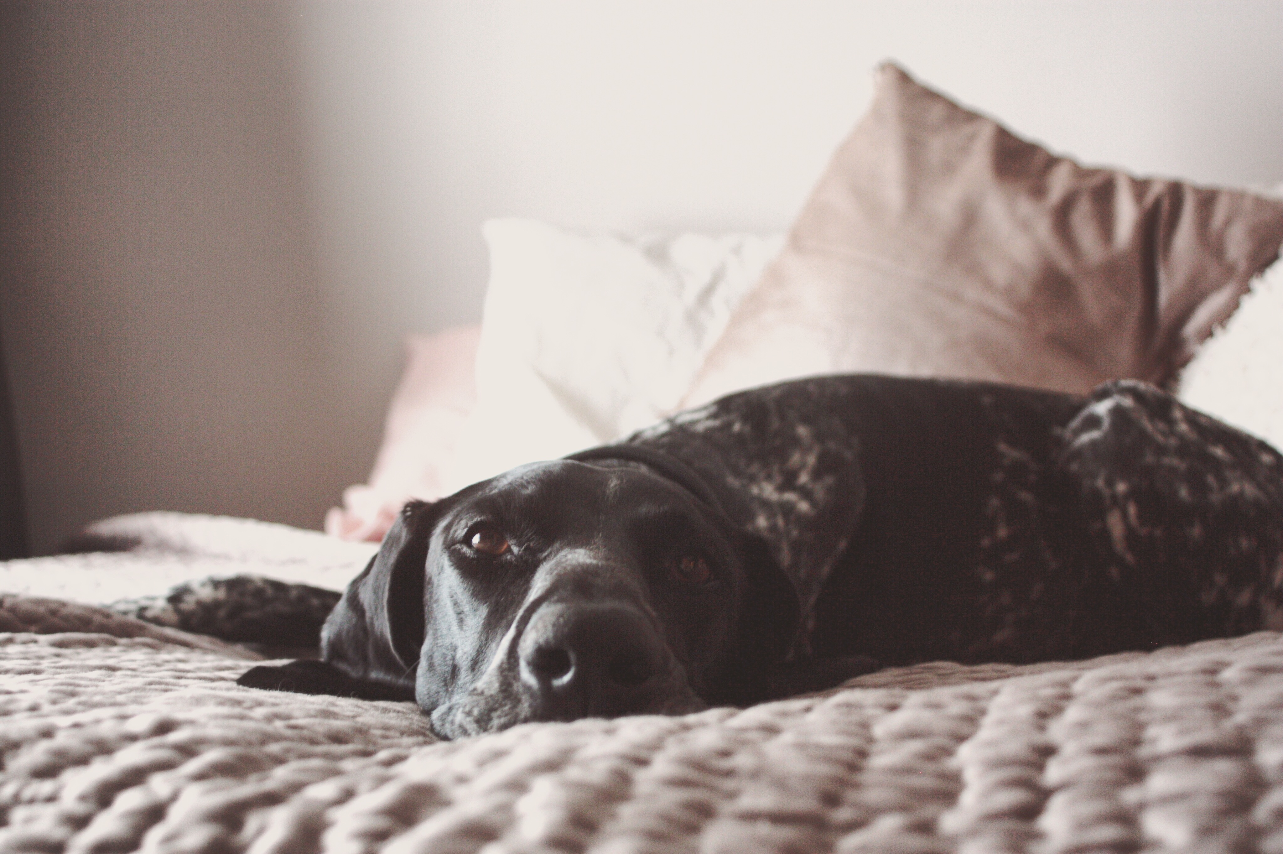 04.2019_Dogs_00045