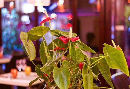 Le Poivre Rose restaurant et vins paris 16