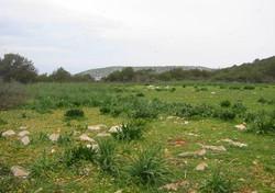Agios Thomas Island - 12