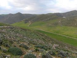 Land in Crete-11